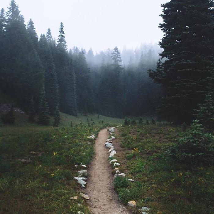 Душа требует леса Фотография, Природа, Лес, Вконтакте, Длиннопост
