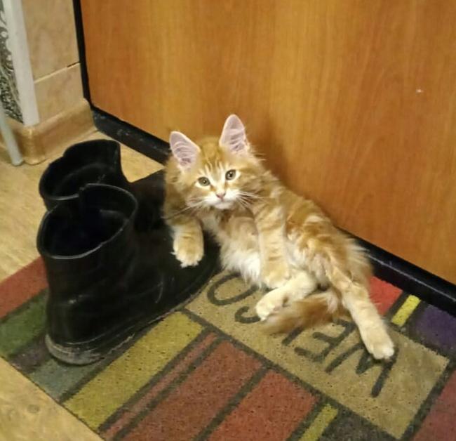 Это мои ботинки! Какие проблемы?