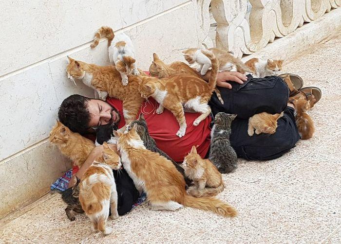 Кошачий приют в Алеппо( Сирия) Сирия, Алеппо, Кот, Приют, Хороший человек, Длиннопост, Домашние животные