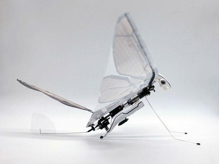 Нового робота MetaFly можно спутать с настоящим насекомым Робот, Дрон, Насекомые, Технологии, Видео, Длиннопост