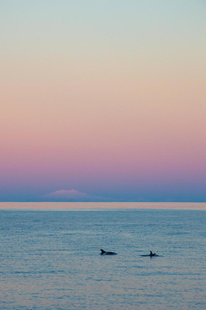 Дельфины и вулкан