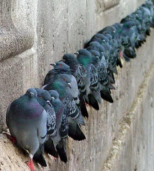 Как избавиться от голубей? Прошу помощи. Птицы, Помощь, Совет, Засрали, Достали, Здание, Длиннопост