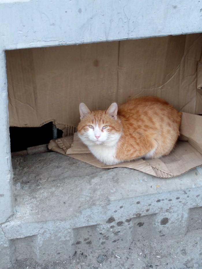 Подвальный котейка Кот, Длиннопост, Домашние животные
