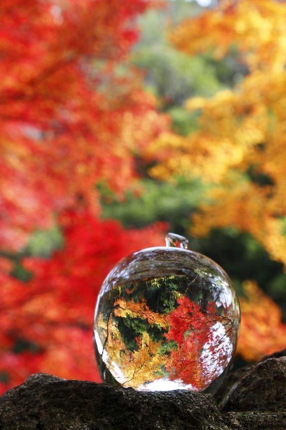Мир в одной капле Красота природы, Мир, Капля воды, Красивое, Длиннопост