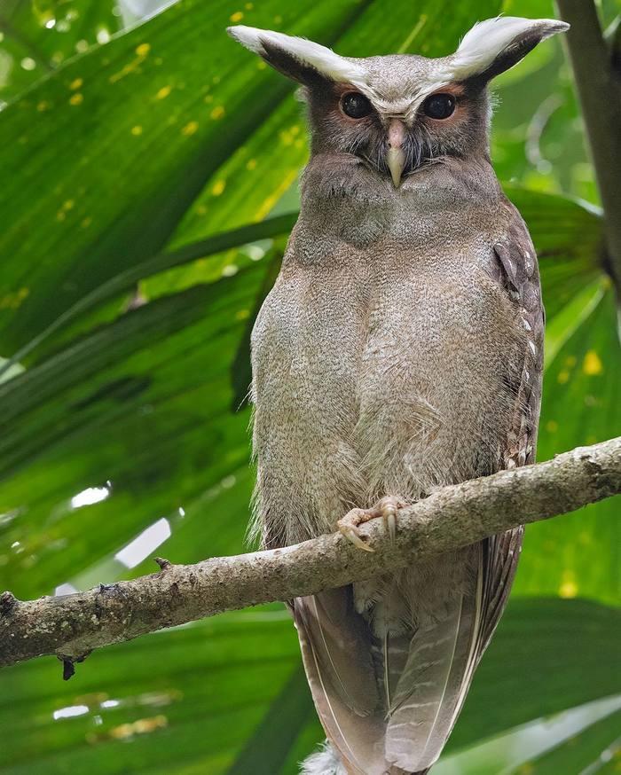 Красивые птицы Индии на снимках Тхирумурти Ра Индия, Птицы, Животные, Природа, Тхирумурти Ра, Длиннопост, Колибри