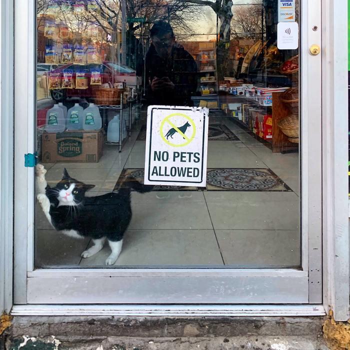 Ты в курсе:«Вход с животными запрещен»