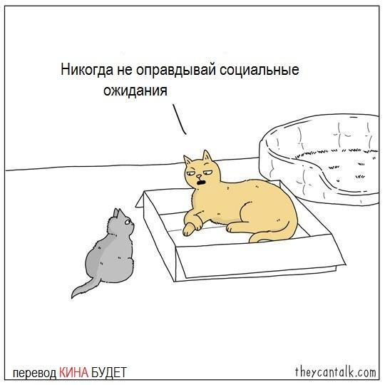 Философия котанов...