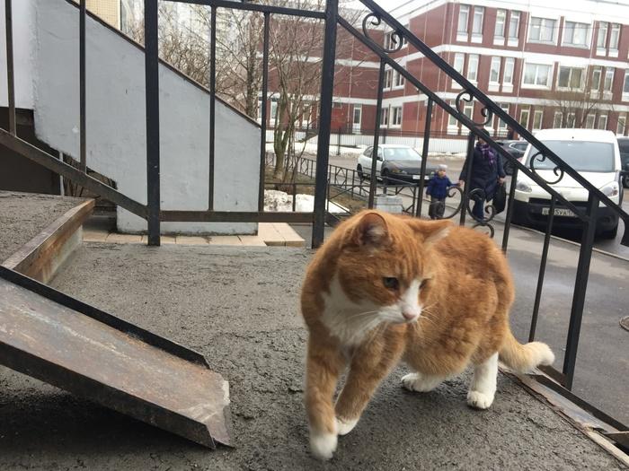 Соседский кот Кот, Кот долгожитель, Длиннопост