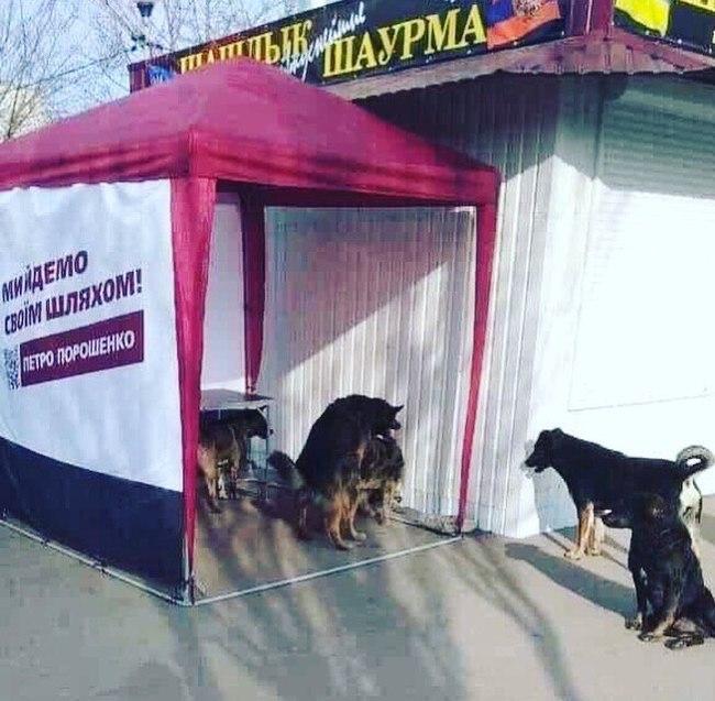 Выборы по-украински