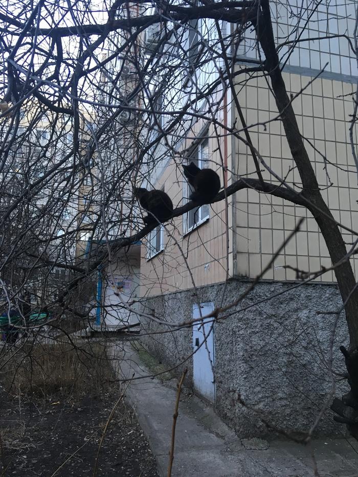 Весна, птички прилетели)))