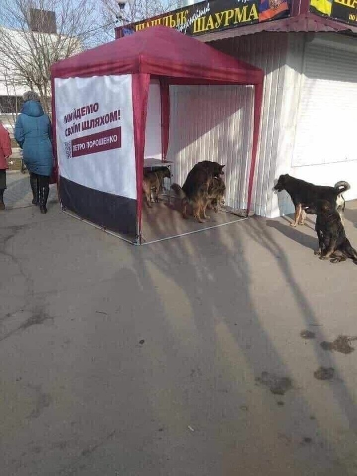Это очень смешно Собака, Выборы, Украина, Совпадение, Домашние животные
