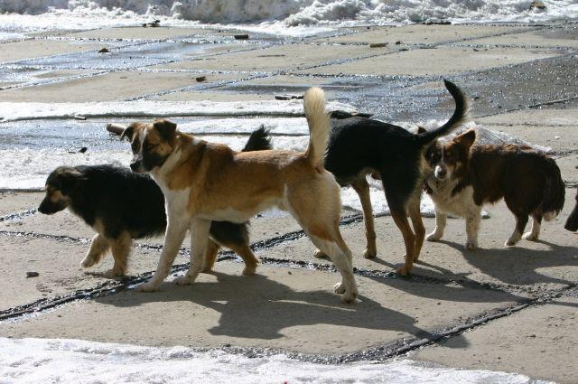 Друзья или враги? Ставропольцы стали заложниками «собачьего» закона Бродячие собаки, Зоозащитники, Закон об ответственном обращен, Угроза