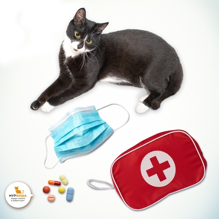 Предупреждён – значит вооружен: 6 распространенных кошачьих инфекций и что о них должен знать каждый. Кот, Муркоша, Приют муркоша, Полезное, Болезни у кошек, Длиннопост