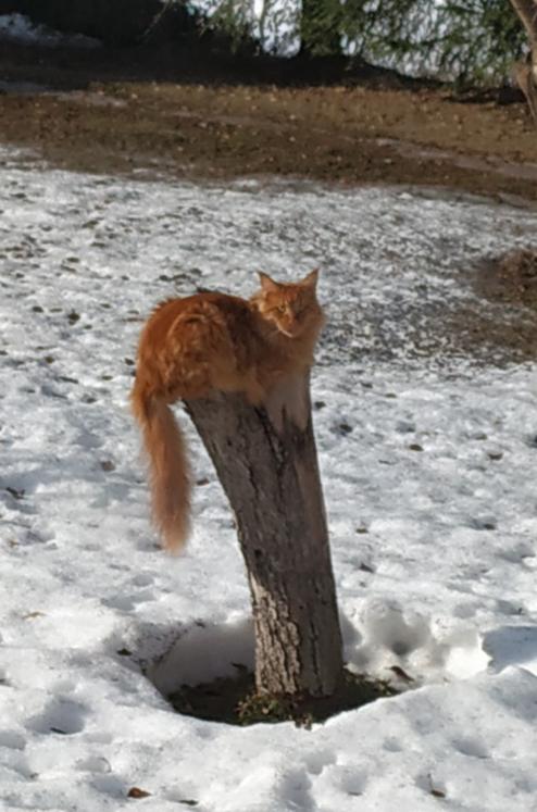 Весна: коты прилетели