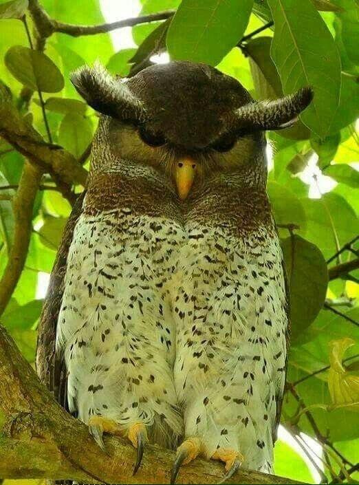 Негодник Птицы, Фотография, Листья, Ветка, Брови