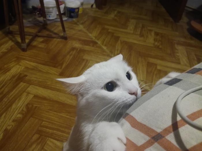 """Режим """"Охотника"""" активирован Кот, Милота, Домашние животные"""