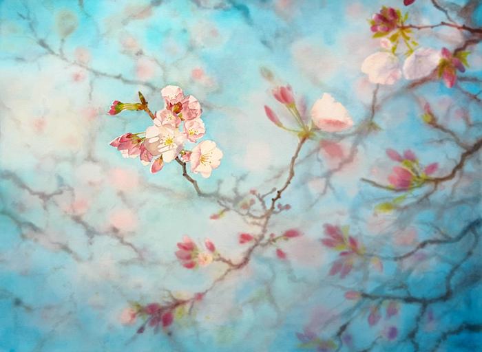 Цветение вишни. Акварель. Акварель, Весна, Вишня, Сакура, Цветение, Цветы, Боке, Рисунок