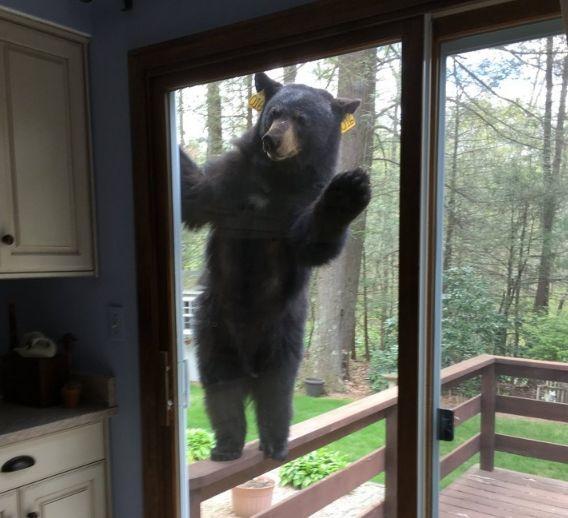 Сосед выходи! Снег растаял, пчелы ждут, уже за мёдом пора)