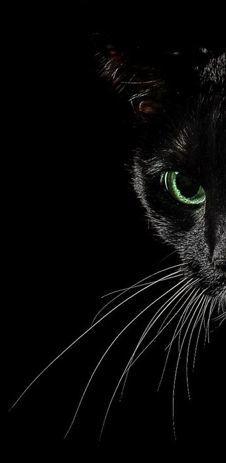 Про нападение. Кот, Темнота, Опасность, Ноги, Текст