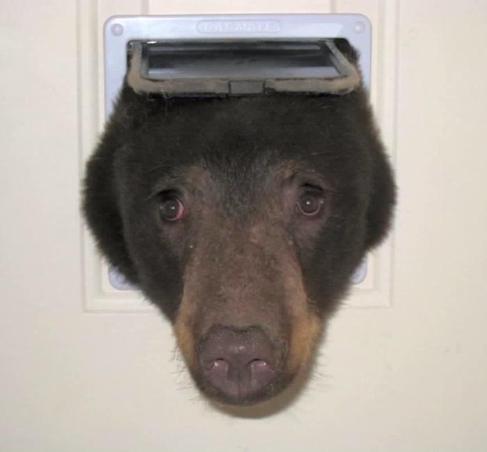 Хуманизация одного медведя Стикеры, Медведь, Хуманизация