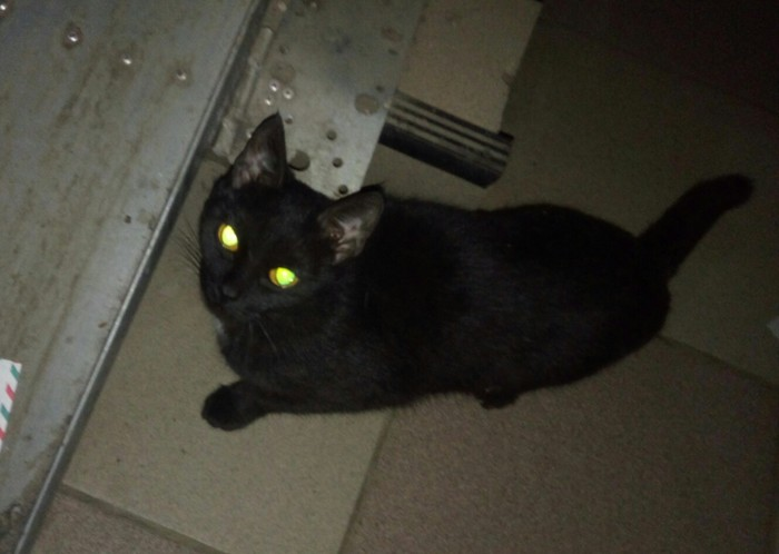 Котик ищет дом, в добрые руки, срочно :( Кот, Животные, Лига Добра, Кошкин дом, Помощь, В добрые руки, Домашние животные, Длиннопост, Без рейтинга