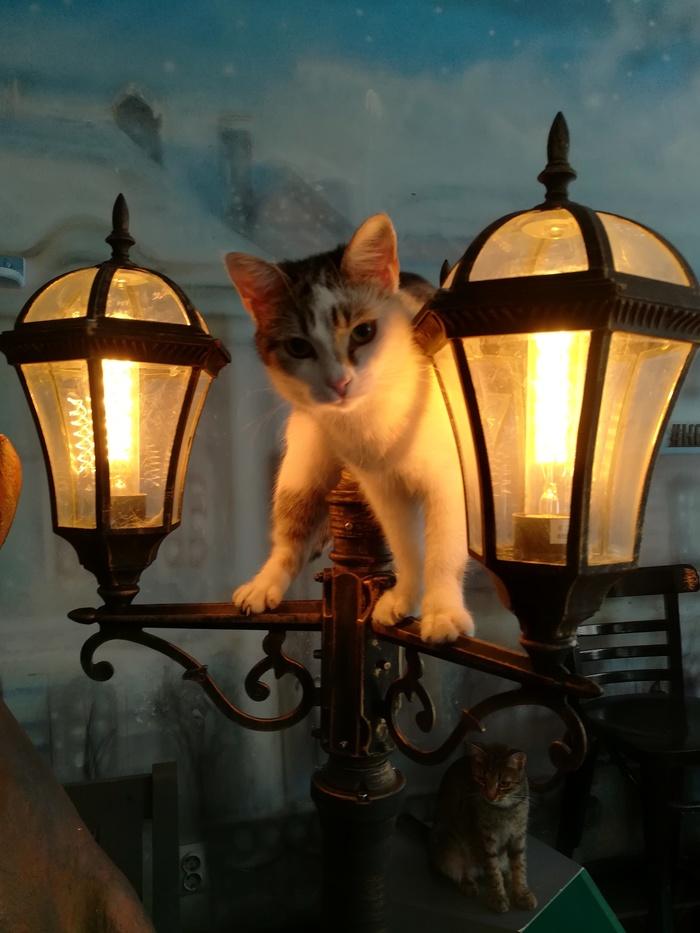 Кот на лампе