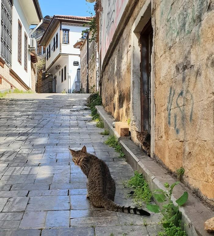 Турция Анталия, Старый город, Котомафия, Длиннопост, Кот