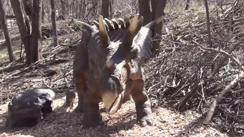 Космоцератопс – самый рогатый динозавр мелового периода Космоцератопс, Динозавры, Длиннопост, Гифка, Пчала