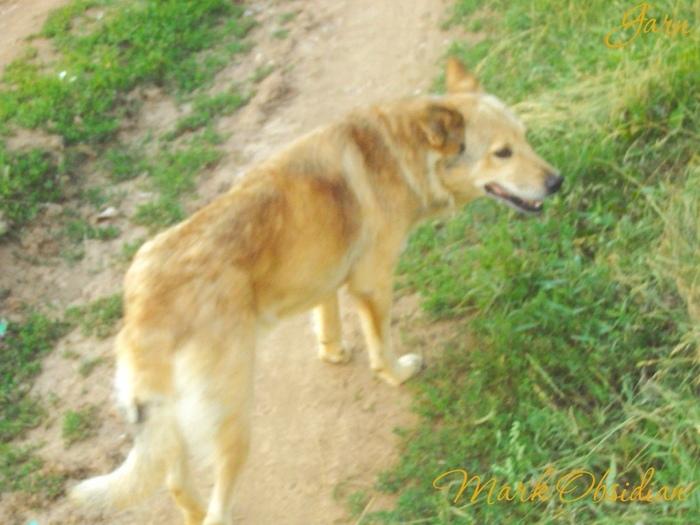 Верность Альмы в далёкой юности... Собака, Первый длиннопост, Markobsidian, Рассказ, Видео, Длиннопост