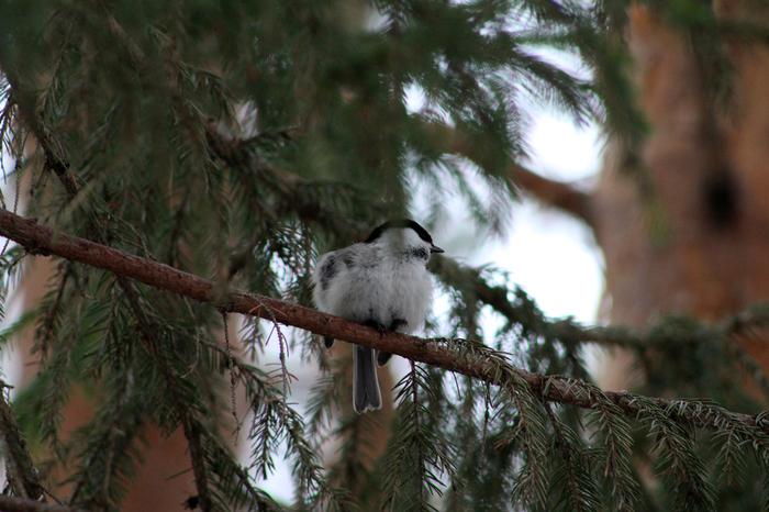 Весенняя прогулка в лесу Весна, Птицы, Фотография, Длиннопост