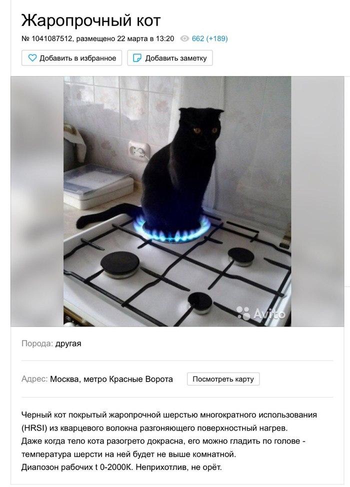 Жаропрочный кот Авито, Объявление на авито, Смешные объявления, Кот, Газовая плита, Photoshop