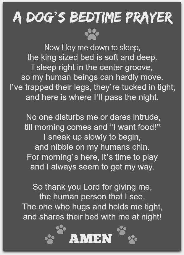 Собачья молитва на сон грядущий ) Собака, Молитва, Стихи