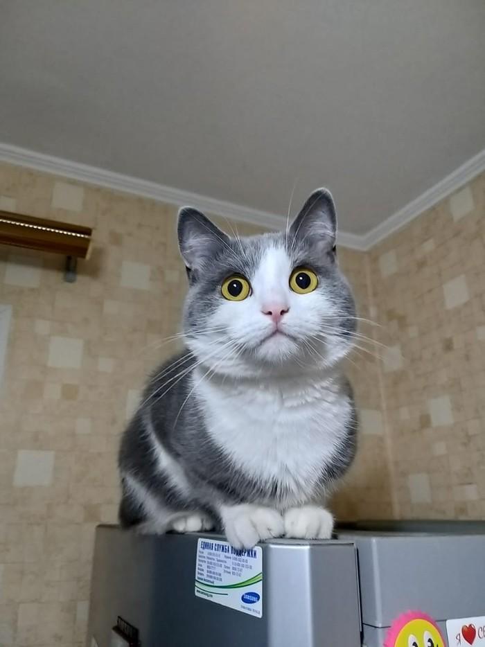 Удивленный щекастый кот