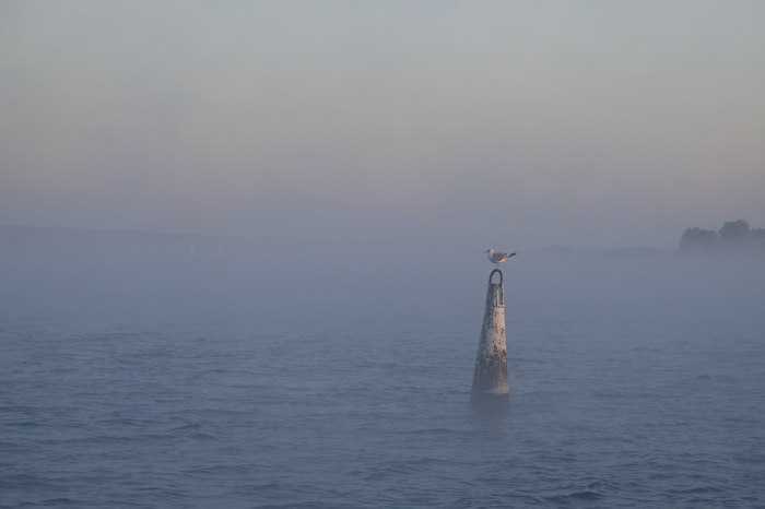 Чайка в тумане. Чайки, Туман, Утро, Рассвет, Река, Днепр