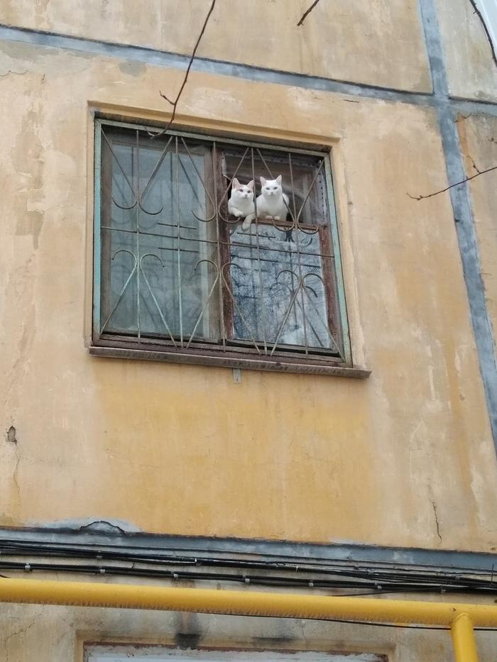 Весенние коты (три штуки) Кот, Окно, Длиннопост