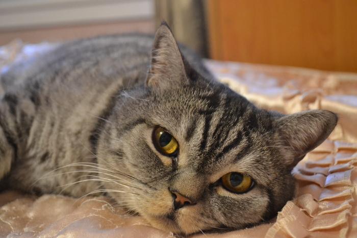 Котик остался без хозяина и дома. Без рейтинга, Ищу дом, Ищу хозяина, Кот, В добрые руки, Помощь животным, Длиннопост, Москва, Домашние животные