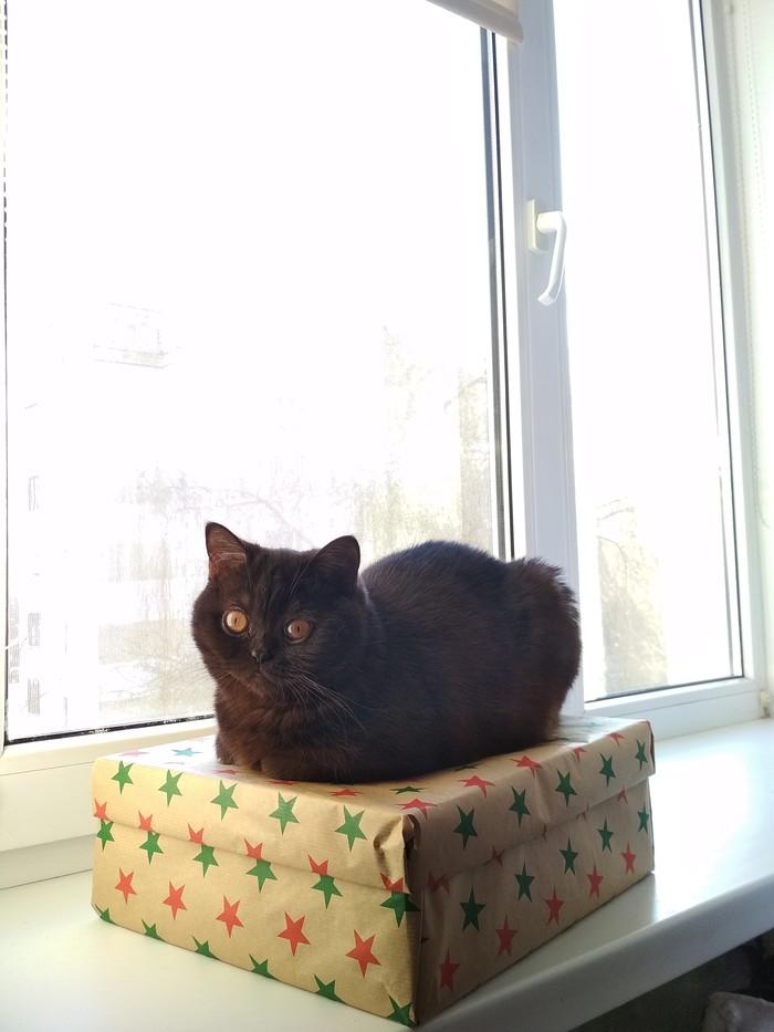 Кошка у окошка Кот, Окно, Щеки, Длиннопост