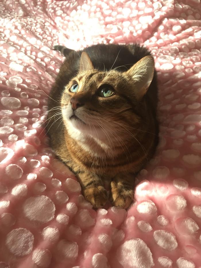 Милый весенний кот Кот, Фотография, Солнце, Плед