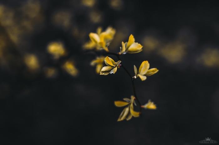 Атмосферы пост #8 Фотография, Природа, Цветы, Вконтакте, Гелиос, Искусство, Длиннопост