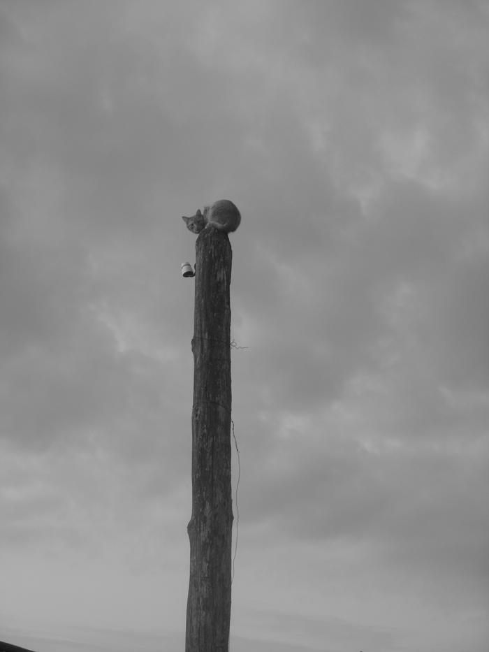 Мой кот Руфус Кот, Кошкин дом, Деревня, Село, Черно-Белое, Память, Кактус, Питомец, Длиннопост
