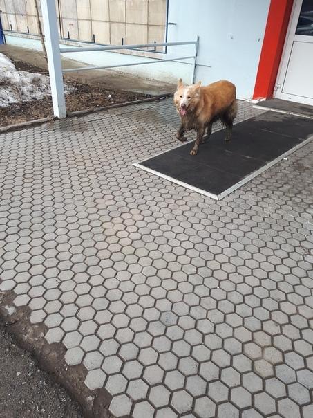 Потерялась собака Собака, Пропала собака, Поиск, Пермь, Без рейтинга, Домашние животные