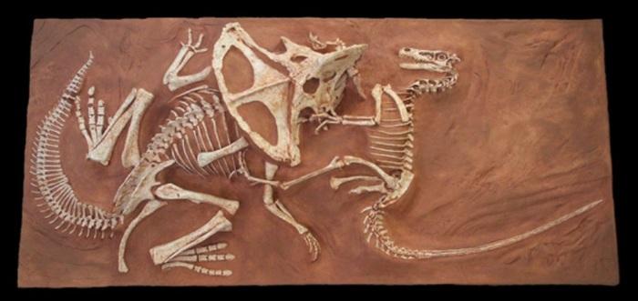 7 находок ископаемых животных, погибших при необычных обстоятельствах Интересное, Палеонтология, Ископаемые, Животные, Длиннопост, Яндекс Дзен