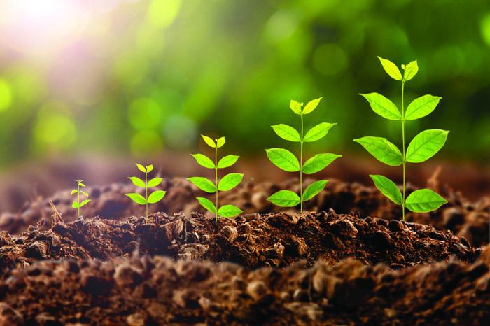 Что такое рост и почему организмы таких размеров Биология, Экология, Рост, Длиннопост