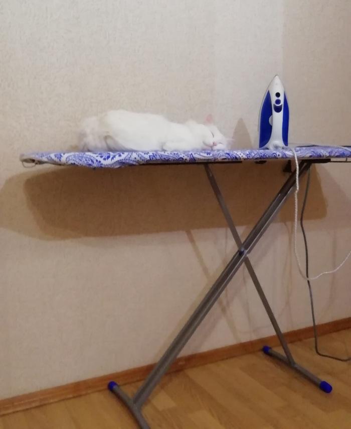 Мой кот создан, чтобы его гладили