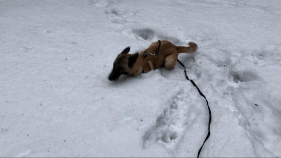 Явно не все так просто с этим снегом