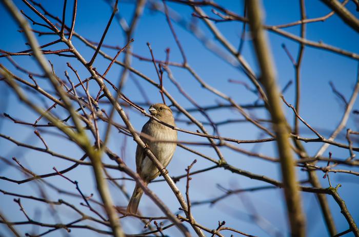 Птицы в Выборге 2 Птицы, Длиннопост, Фотография, Выборг, Воробей, Зеленушка, Голубь