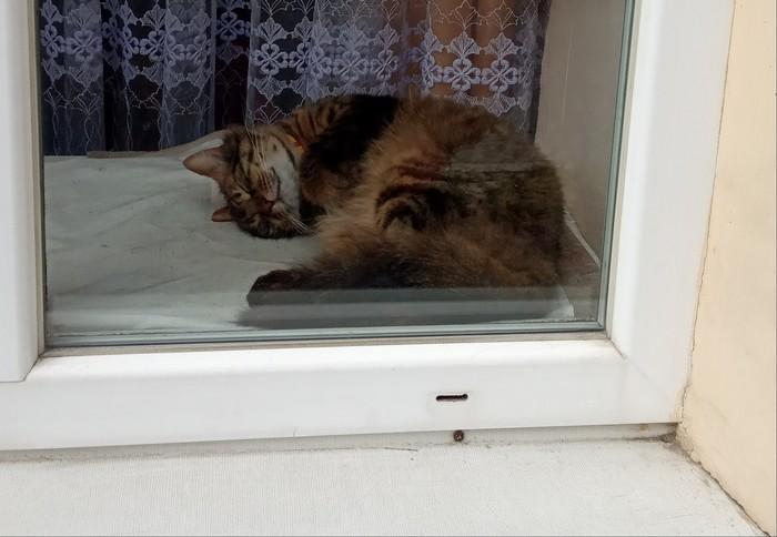 Мы тут сладко спим Кот, Львов, Иду, Сон, Домашние животные