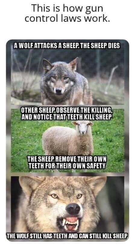 Как работает оружейное законодательство. Законодательство, Оружие, Право на оружие, Волк, Овцы