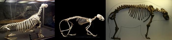 33 тюленя: сексуальные ластоногие. Животные, Длиннопост, Тюлень, Природа, Scientaevulgaris