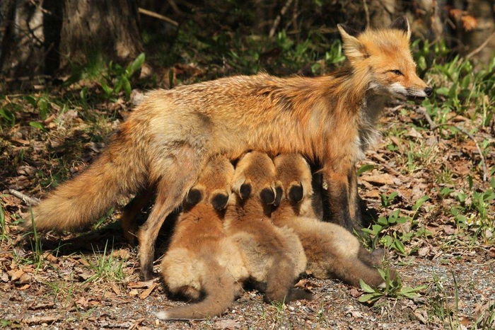 Мама и малыши